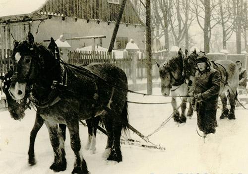 pferdefuhrwerk-spedition-junghanns